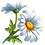 daisy_exp.png