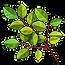 Bush Branch