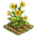 t_weather2_sunflower_3.png