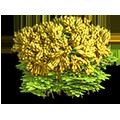m_mimosa_3.png