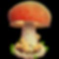 b_king_mushroom.png