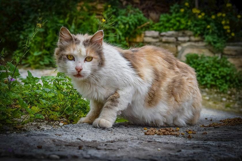 cat-3214846_1920.jpg