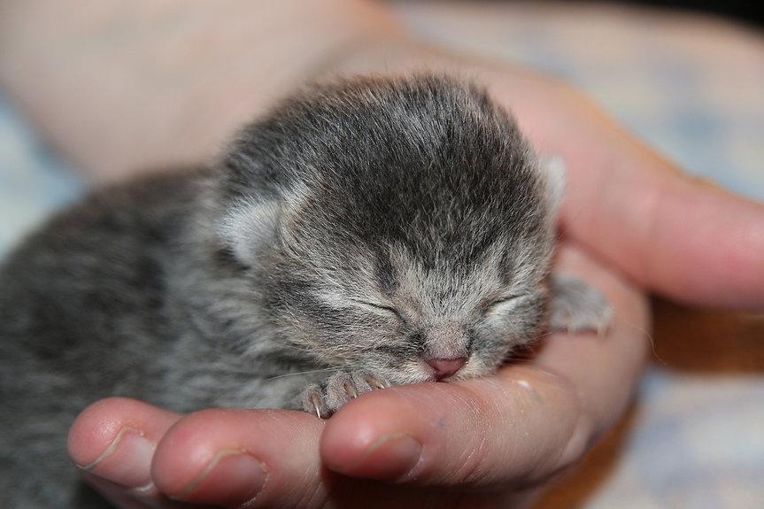 cat-baby-2204590_1920.jpg