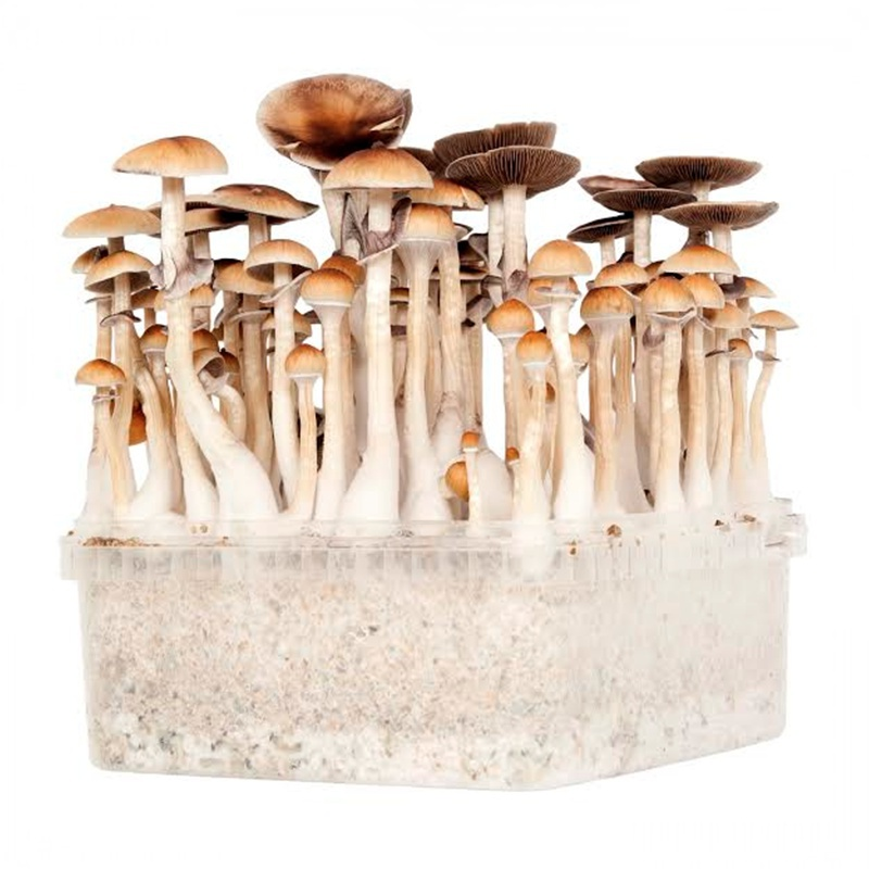TYPES OF MUSHROOMS   Microcybin - Microdosing with Mushrooms