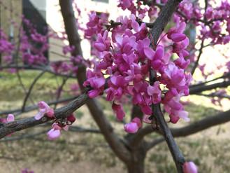 Lubbock in the Spring