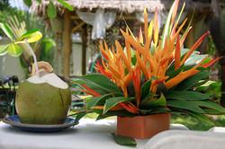 Atsumi coconut