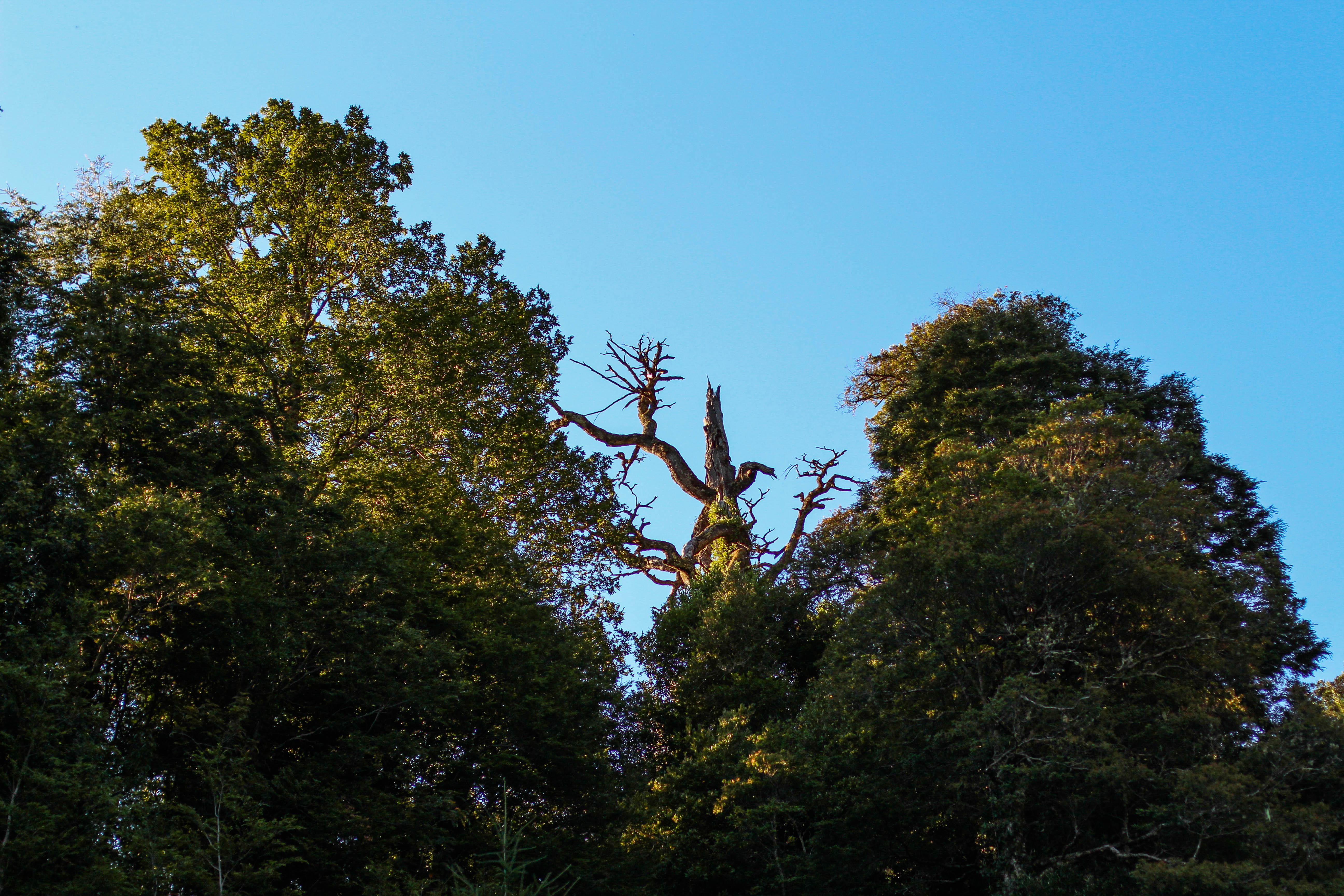 Árbol Protector