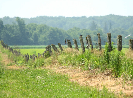 The Species At Risk Partnerships on Agricultural Lands Coming This Fall!