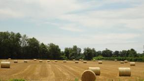 Food hub needs farmers