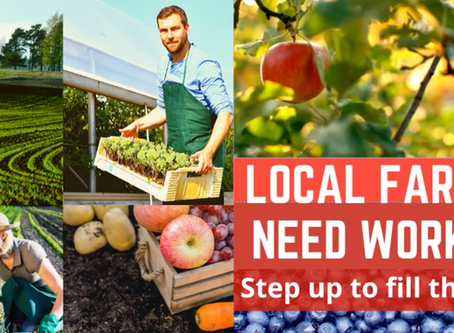 Attention Job Seekers: Local Farmers Need Workers! Apply Today!