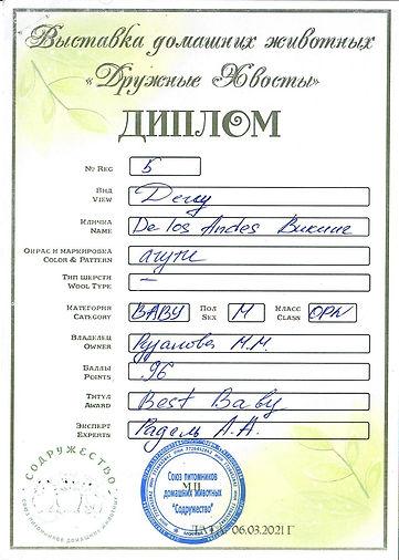 Купить дегу в питомнике, купить дегу в Москве, питомник дегу, цветные дегу в Москве, чилийская белка