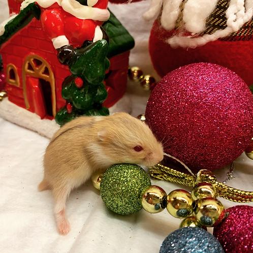 Hamsters World Изумруд (самец)