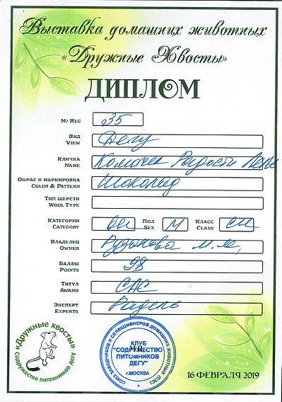 Купить дегу в питомнике, купить дегу в Москве, питомник дегу, цветные дегу в Москве