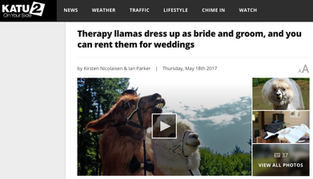 Therapy llamas dress up as bride and groom, and you can rent them for weddings