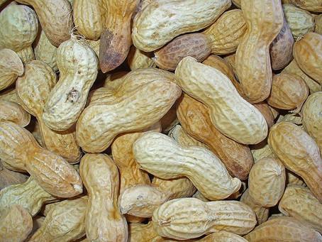 Peanut allergy ..... or herbicide effect?