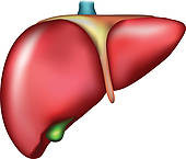 How To Check Your Liver