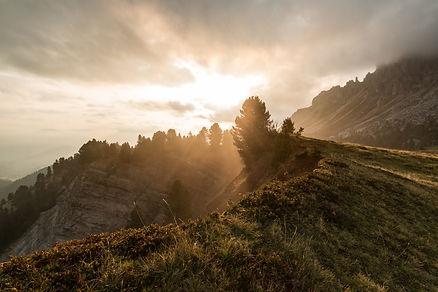 cloudy-conifers-dawn-592287.jpg