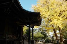 Goryo Jinja Shrine, Hase, Kamakura