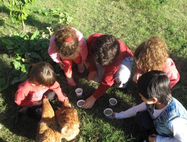 niños gallinas.jpeg