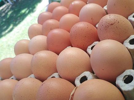 huevos_edited.jpg