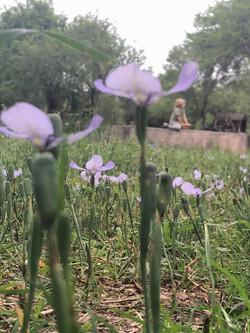 flor niño lejos