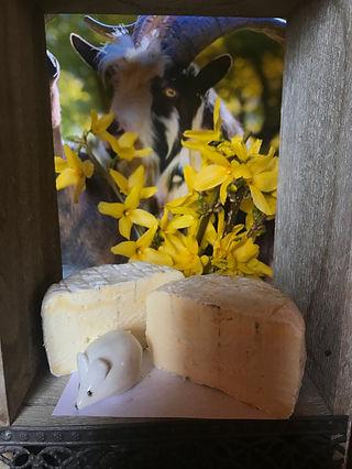 fromage de vache