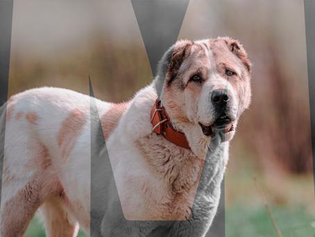 Собачья гостиница: Блюмпус