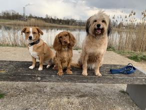 Thema Hundekumpel-Innen