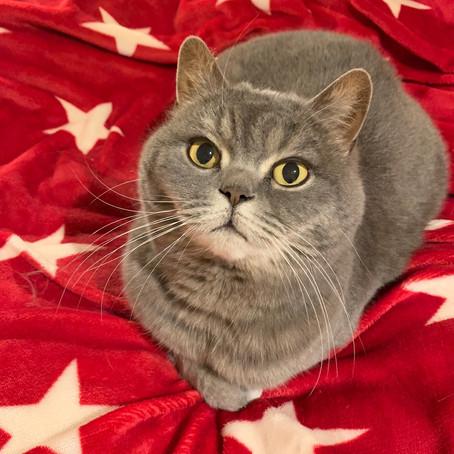 Emma das Geburtstagskind gibt 10% Rabatt auf Katzenfutter von Orijen und Acana