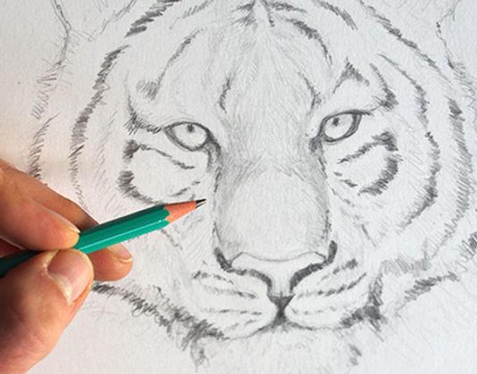 Dessiner-un-tigre-dessin-creation.jpg