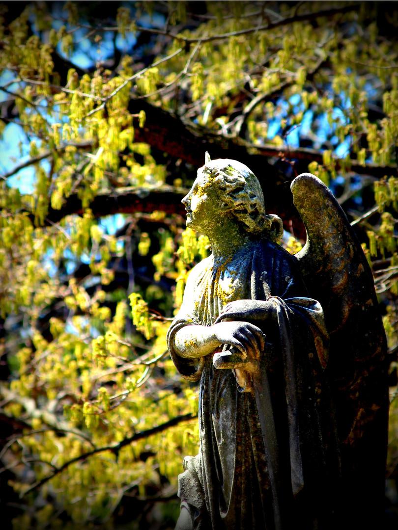 ANGEL IN SPRINGTIME