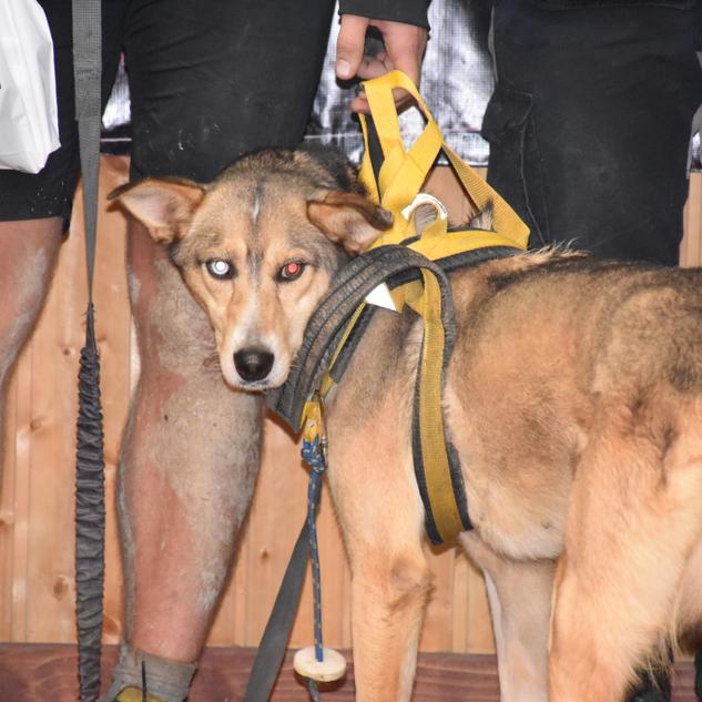 Fundacja Razem z psem 360.png