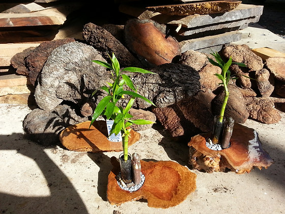 Burl Plant Holder