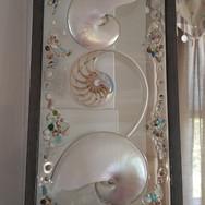 triple nautilus shell