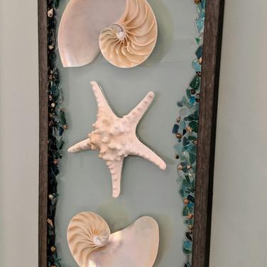 Nautilus shells and Seastar. $175