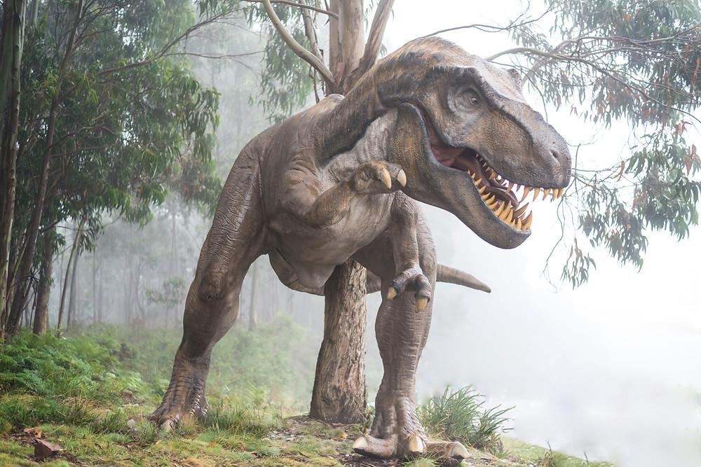 dinosaur and redwood