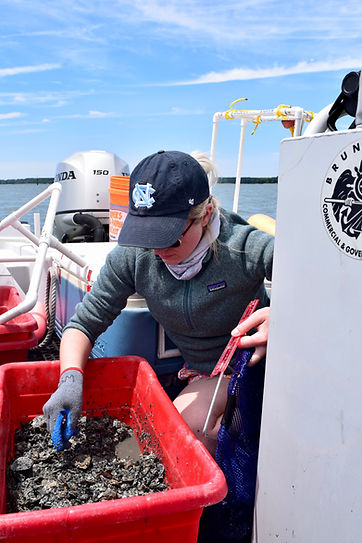 Zofia Knorek measures oysters on a boat.