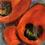 """Thumbnail: """"Poppies"""""""