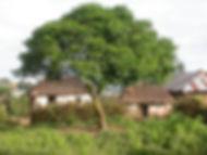 arbre à neem