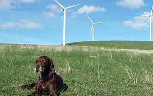 elmo 3 turbines.jpg
