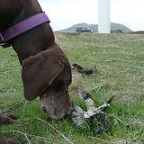 elmo sniffing magpie.jpg