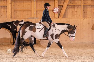 Krymsuns Hot Dream Hunter Under Saddle