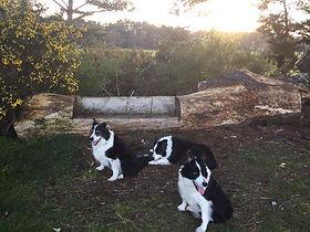 missemma-dogs.jpg