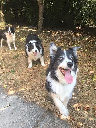 dogs_3.jpg