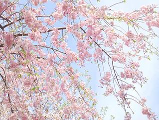 Pray for Kyushu...!