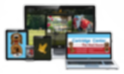 Professional Website Design Social Media Marketing Digital Marketig Graphic Design