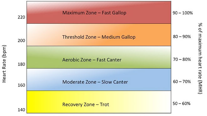 Cardiosprt Equine Heart Rate Zones