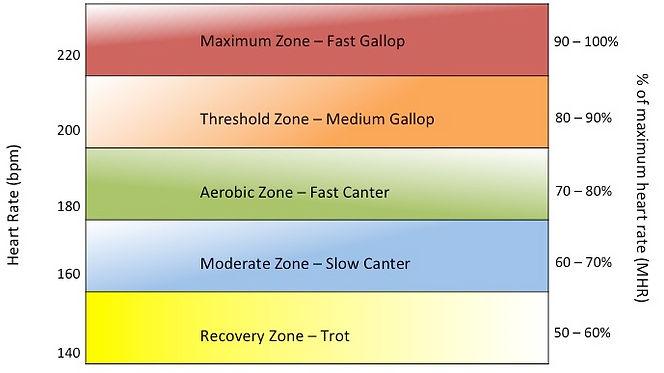 Cardiosprt Equine Heart Rate Zones