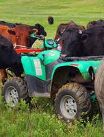 Cow on 4Wheeler.jpg