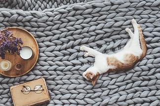 Ginger kitten relaxing on knitted woolen